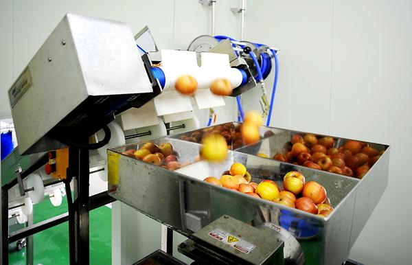 Fruit Extraction